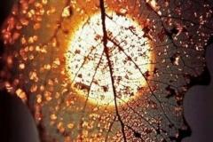 DANIELA-RODARI5-Le-meraviglie-della-natura-in-autunno