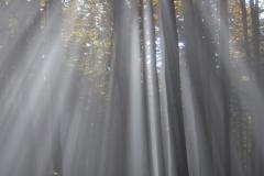 ESTER-VALENTINI-Nebbia