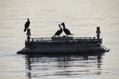FOTO-MArchesi_Aironi-traghettatore-di-amanti